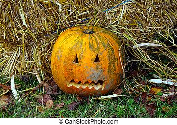 halloween., calabaza, amarillo, pasto o césped, leaves., preparando