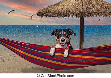 hamaca, perro, playa, verano
