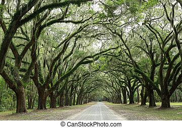Hay dos robles cubiertos de musgo. Forsyth Park, Savannah, Geo