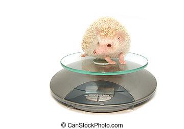 Hedgehog en escalas de peso
