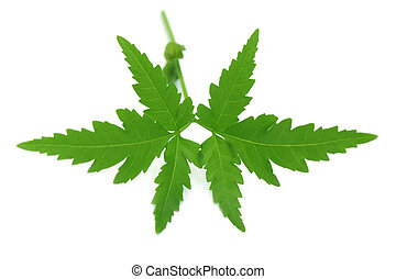 Herbal neem se va