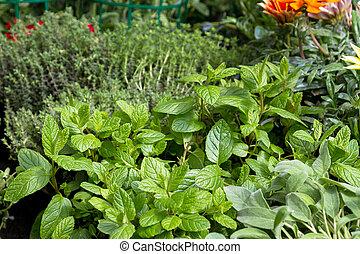 Herbs en venta en el mercado