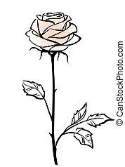 Hermosa flor rosa rosa rosada, aislada en el fondo blanco, ilustración vectora