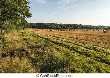 Hermosa imagen campestre de fardos de heno en el campo de verano durante el colorido atardecer