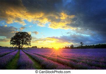 Hermosa imagen de hermoso atardecer con nubes atmosféricas y cielo sobre campos de lavandería en el paisaje del campo inglés