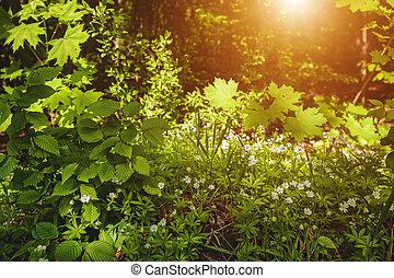 Hermosa mañana en el bosque de primavera, antecedentes naturales