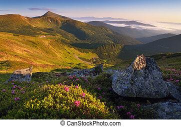 Hermosa mañana en las montañas