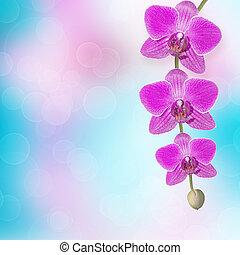 Hermosa rama de orquídea rosa en un fondo abstracto de un delicado