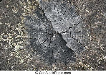 Hermosa rebanada de tronco de árbol