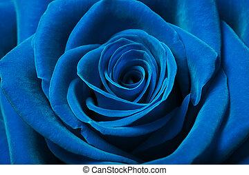 Hermosa rosa azul