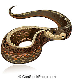Hermosa serpiente marrón realista
