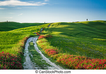 Hermosa vista de campos verdes y prados al atardecer en Toscana