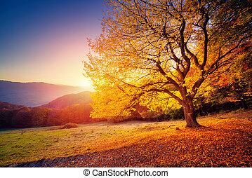hermoso, árboles de otoño