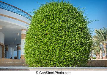 Hermoso arbusto ornamental en el hotel