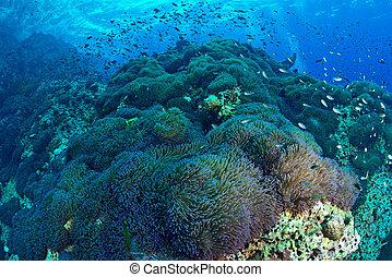 Hermoso arrecife de coral en Chumporn na