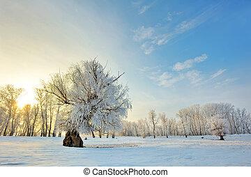 Hermoso atardecer de invierno con árboles