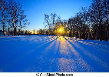 Hermoso atardecer en el bosque de invierno