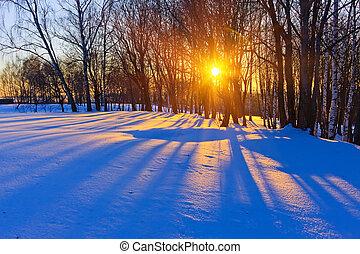 Hermoso atardecer en un bosque de invierno