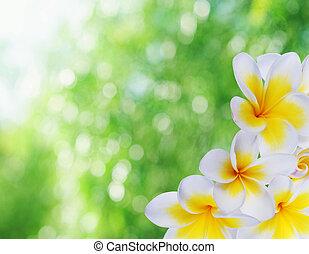Hermoso bokeh natural y frangipani