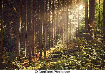 Hermoso bosque soñado