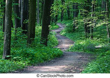 Hermoso bosque verde