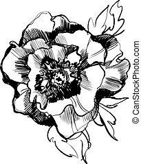 hermoso, bosquejo, peón, florecer