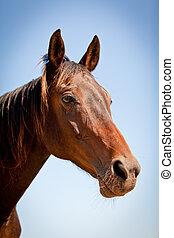 Hermoso caballo cruzado rubio fuera del rancho de caballos