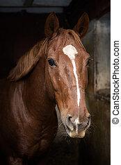 Hermoso caballo en un establo
