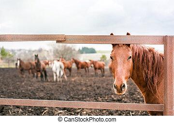 Hermoso caballo en un rancho mirando