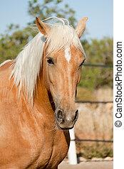 Hermoso caballo