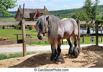 Hermoso caballo irlandés en un aviario en un rancho.