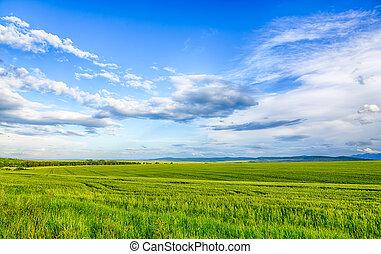 Hermoso campo de trigo, nube y montaña. Imagen de HDR