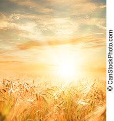 Hermoso campo de trigo.