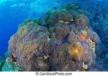 Hermoso coral, coral, coral, corales, arrecifes de coral, buceo, pescado, golfo de Tailandia, ko samui, ko tao, buceo, Tailandia, peces tropicales, peces bajo el agua, mundo submarino;