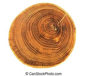 Hermoso corte de árbol