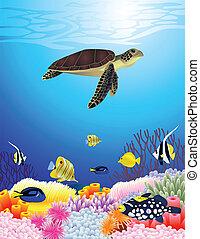 Hermoso fondo de vida marina