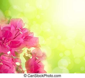Hermoso fondo floral abstracto con flores rosas. Diseño fronterizo