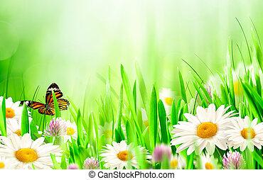 Hermoso fondo primaveral con flores de manzanilla