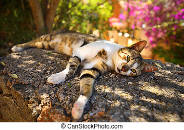 Hermoso gato de pueblo descansando en la sombra en un caluroso día de verano