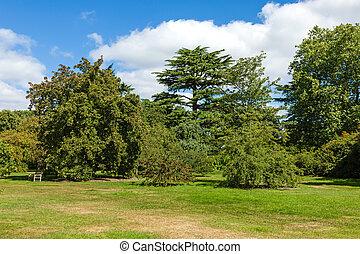 Hermoso jardín de bosques verdes con sol