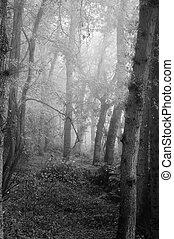 Hermoso otoño la naturaleza nubla el paisaje forestal