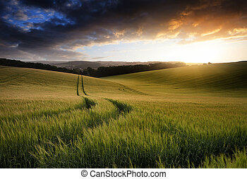 Hermoso paisaje de verano del campo de cultivo de trigo durante el atardecer