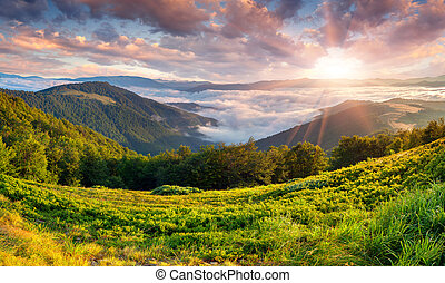Hermoso paisaje de verano en las montañas. Al amanecer