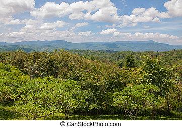 Hermoso paisaje verde de montaña con árboles