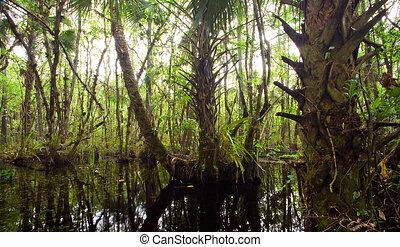 Hermoso pantano denso en Florida Everglades