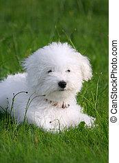 Hermoso perrito