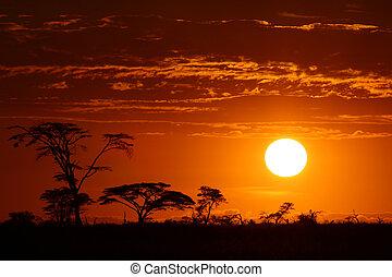 Hermoso safari África Sunset