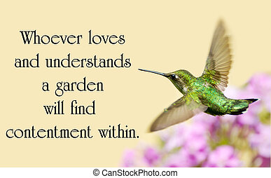hermoso, sobre, jardín, chino, naturaleza, movimiento, throated, proverbio, rubí, colibrí