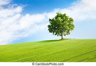 hermoso, solitario, paisaje árbol