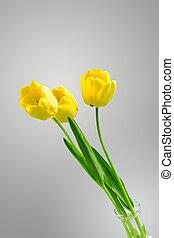 hermoso, toned, tulipanes, amarillo, neutral, plano de fondo